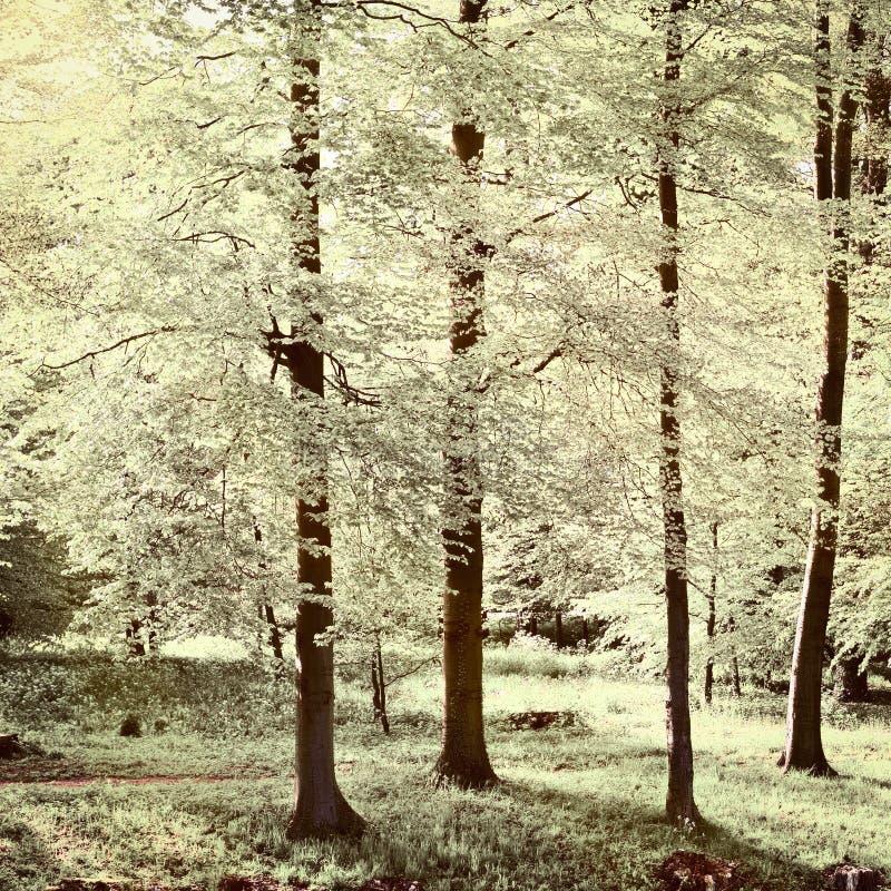 greenwood fotos de stock royalty free