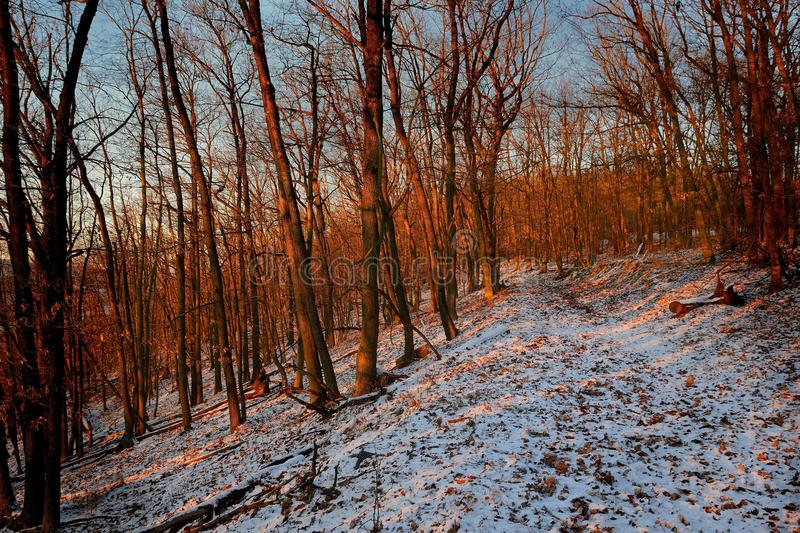 Greenwood in winter in the evening enlightened by sun.  stock photo
