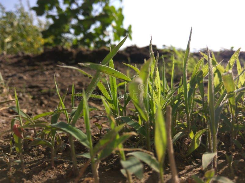 Greeny травянистое стоковое фото