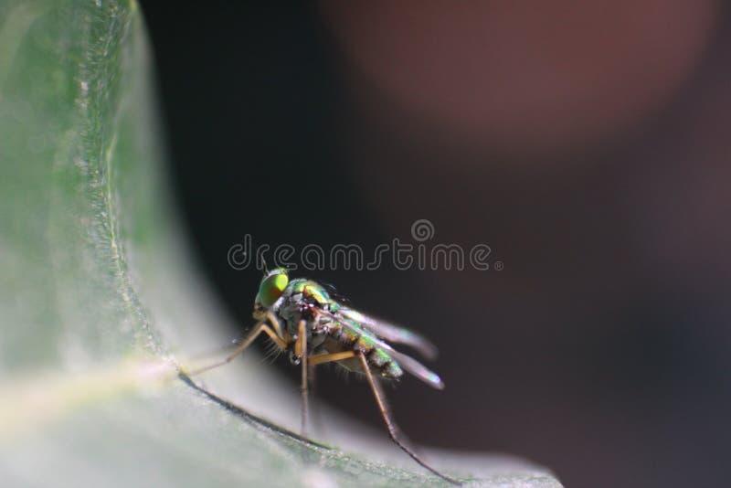 Greeny insekt zdjęcia royalty free