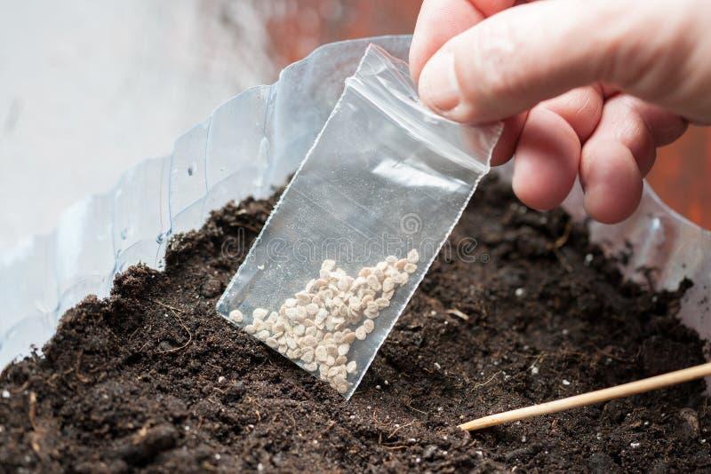 Greeppakket met zaden voor het planten van zaailingen de groenteninstallaties van de landbouwersinstallatie stock foto's