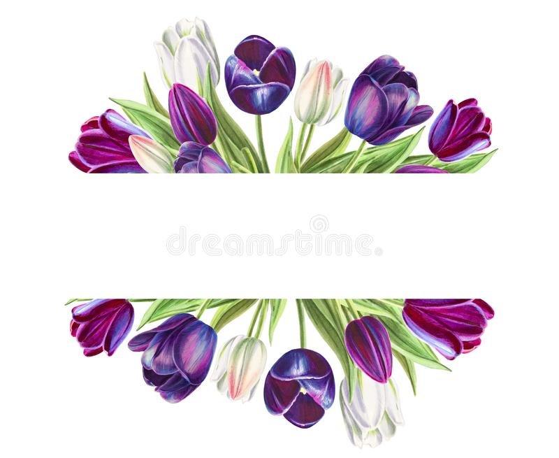 Beautiful text frame from white and black tulips. Marker drawing. Watercolor painting. stock illustration