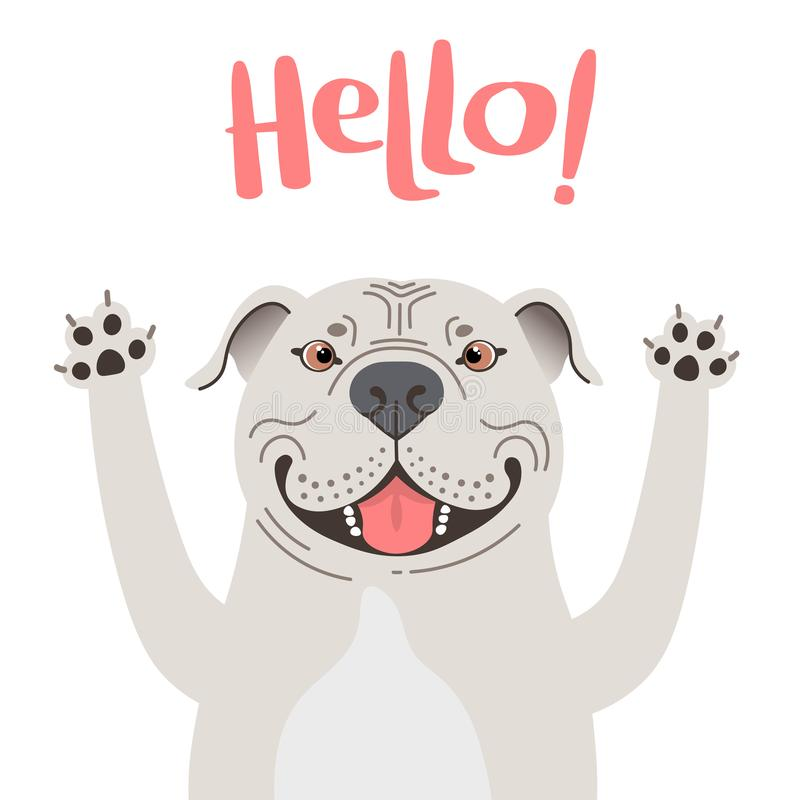 Greeting card with cute Pitbul dog. Sweet American Staffordshire Pit Bull Terrier says hello. Vector illustration royalty free stock photo