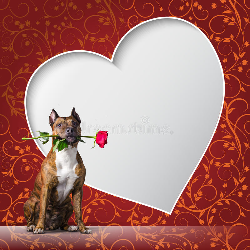 Greeting card with a dog with rous and frame in the shape of heart. stock illustration