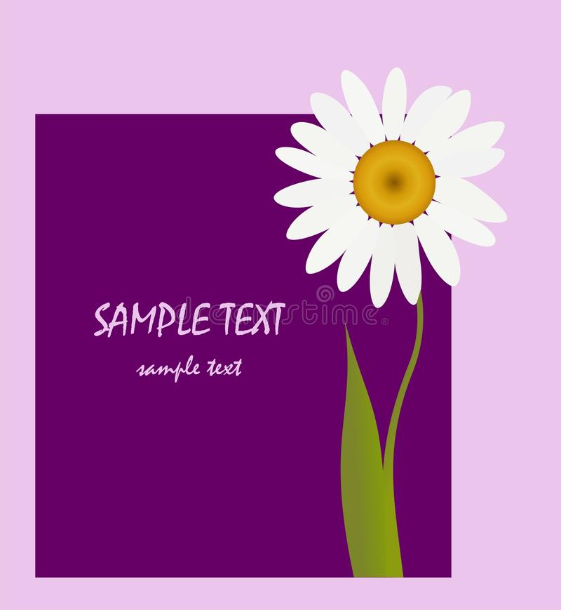 Greeting card with flower. White flower on violet background vector illustration