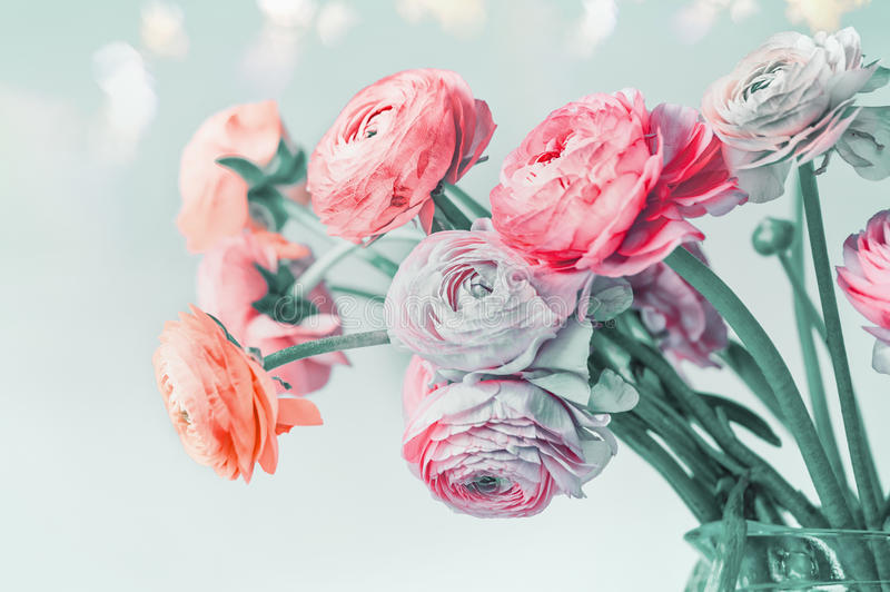 Greeting card with pastel color flowers and bokeh, floral border. Lovely Ranunculus flowers blooming at light blue background royalty free stock images