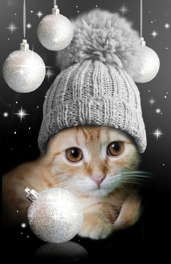 Christmas cat card. Greeting card to christmas with cute cat royalty free stock photos