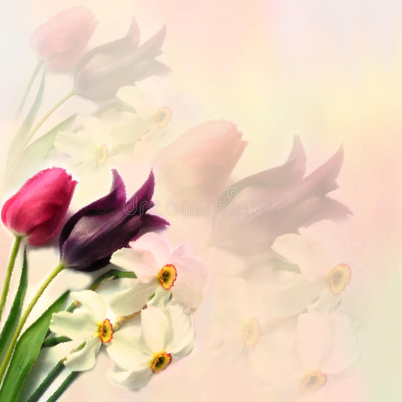 Greeting floral card with tulips and narcissus. On hazy background in pastel colors vector illustration