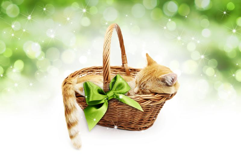 greeting or gift card, ginger cat inside wicker basket with green ribbon bow, isolated on Christmas bright lights background stock photography
