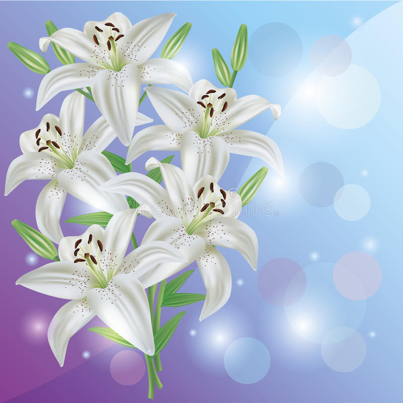 Greeting or invitation card with lily flower. Greeting or invitation card with white lily flower. Light floral background vector illustration