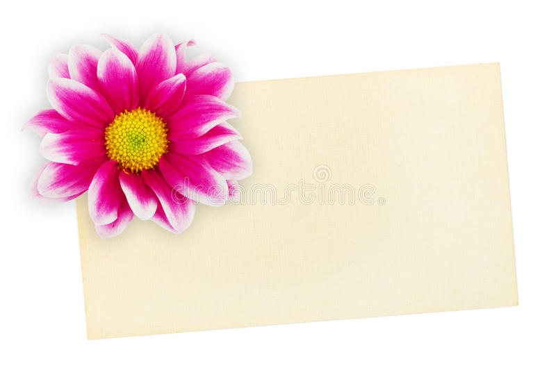 Greeting paper card and flower. Isolated on white background royalty free stock photos