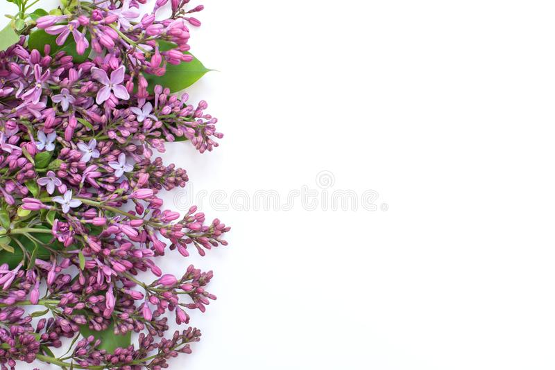 Lilac flowers for the holiday and wonderful congratulations. Greeting picture for MMS picture with lilac with free space for wishes and greetings royalty free stock image