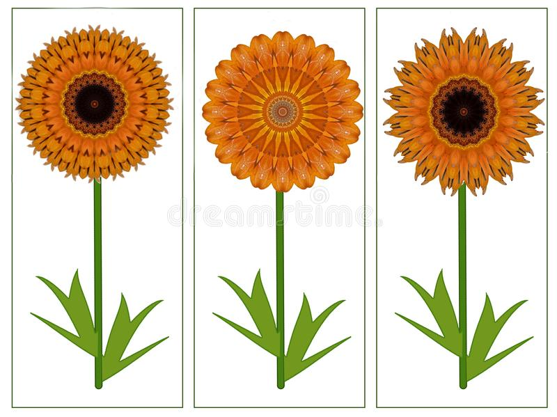Greetings card with three yellow orange summer flowers vector illustration