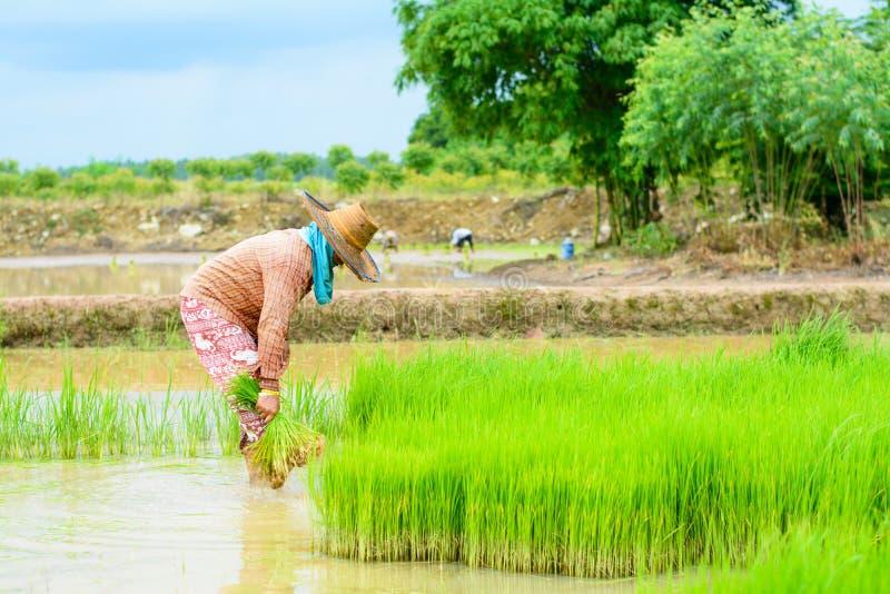 Greffe d'agriculteur images stock
