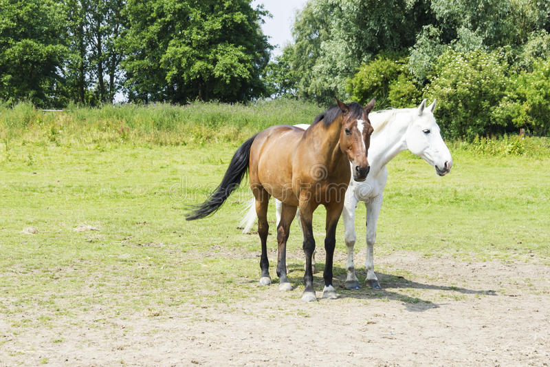 Gregge dei cavalli contro fondo immagini stock libere da diritti