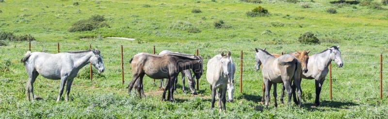 Gregge dei cavalli in un prato fotografia stock
