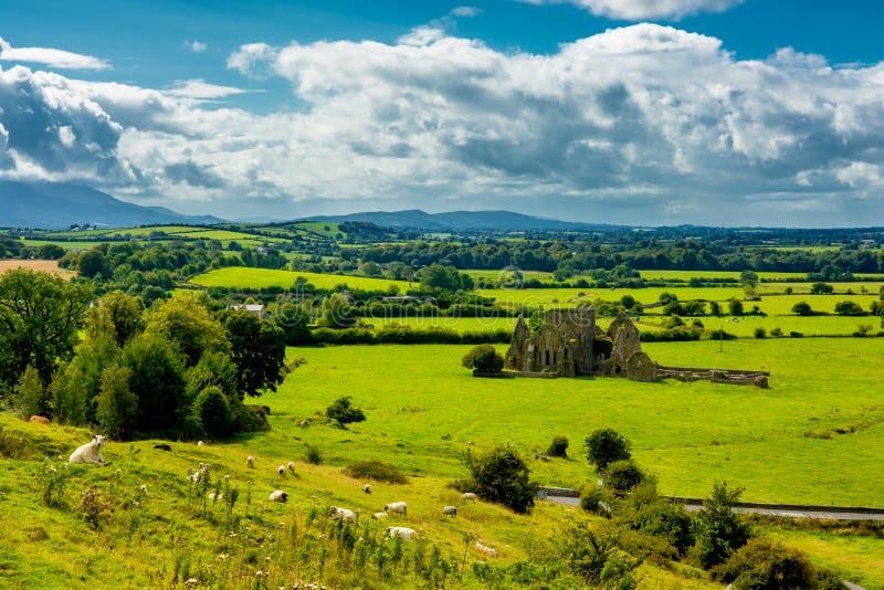 Gregge del bestiame nel paesaggio di Tipperary in Irlanda immagine stock libera da diritti