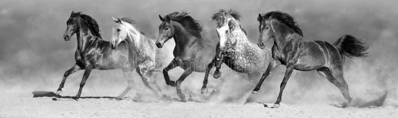 Gregge del cavallo nel moto immagini stock libere da diritti