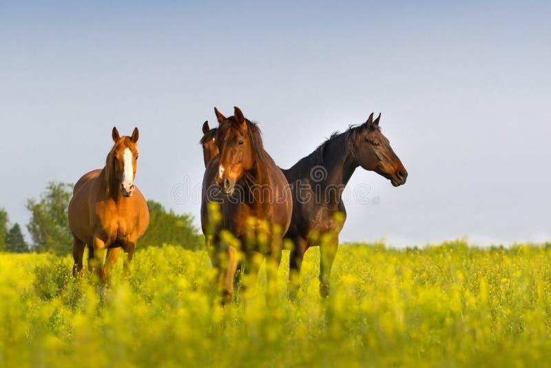 Gregge del cavallo sul pascolo fotografia stock