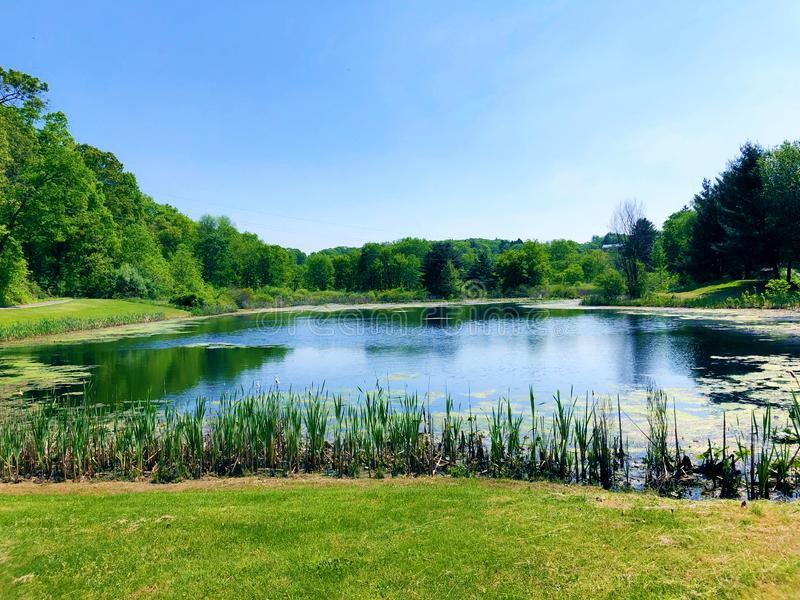Gregory Pond Park-de zomermening royalty-vrije stock foto's