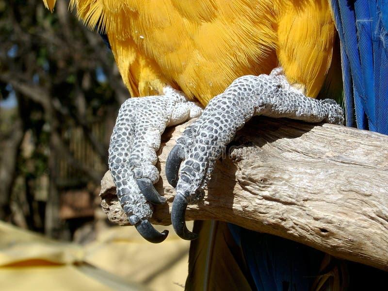 Download Greifer stockbild. Bild von federn, schmerz, macaw, frucht - 26927