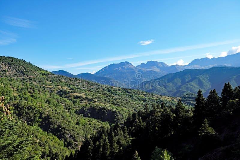 Grekiska bergpinjeskogar, Grekland arkivbild