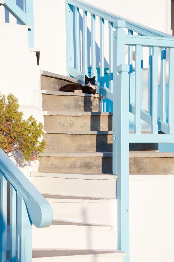 Grekiska katter - härliga katter som sitter på trappan på entrancen royaltyfri foto
