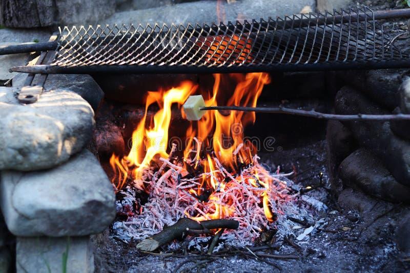 Grelhando a parte de queijo na vara de madeira Alimento muito saboroso no fogo do acampamento Alimento checo típico quando assado foto de stock