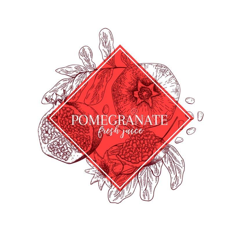 Grenade, feuilles et fleur tirées par la main Bannière gravée de vecteur curatif Ingrédient de nourriture, aromatherapy, faisant  illustration libre de droits