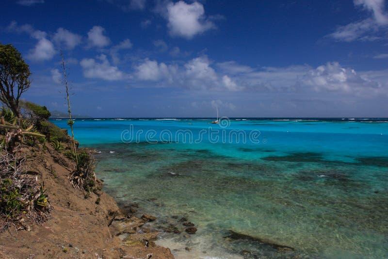 Grenadinenriff lizenzfreies stockfoto