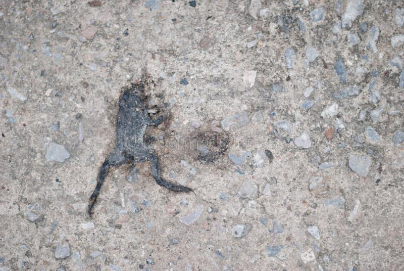 Grenouille écrasée sur la rue photos stock