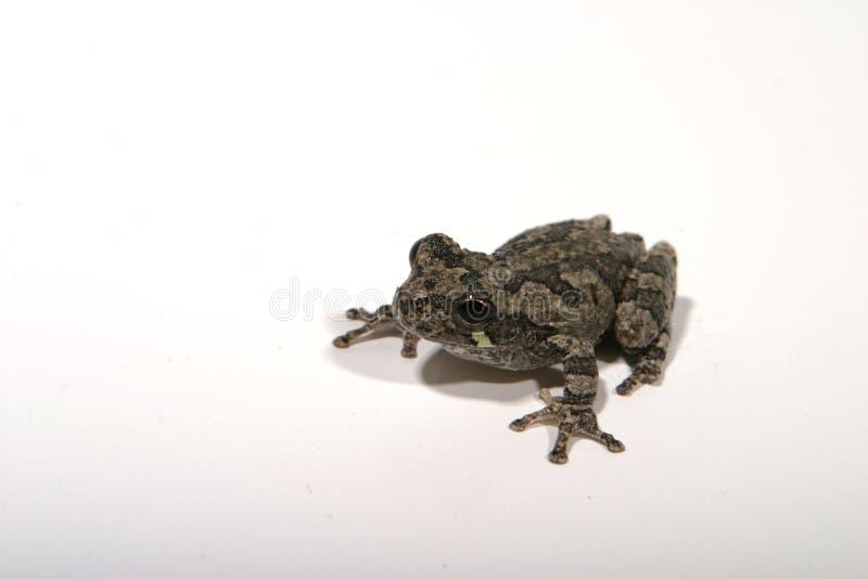 Download Grenouille 5 image stock. Image du grenouille, concept, palmé - 84073