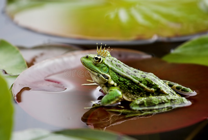Grenouille images stock