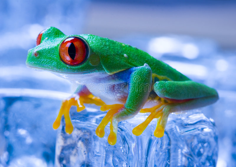 Grenouille froide image stock