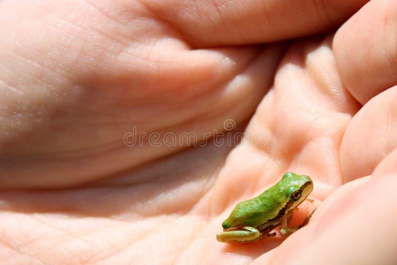 Grenouille minuscule dans la paume de la main photo libre de droits