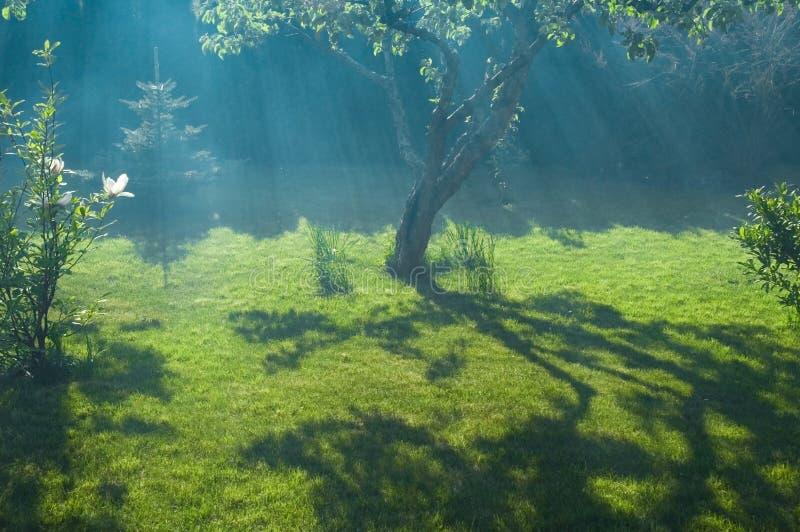 Grenouille, soleil et jardin paisible photos libres de droits