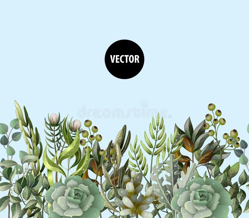 Grens met bladeren en succulent in waterverfstijl Eucalyptus, magnolia, varen en andere vectorillustratie stock illustratie