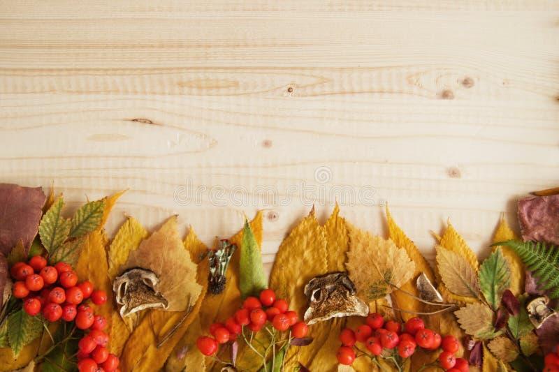 Grens van droge kleurrijke de herfstbladeren, verse lijsterbes en gedroogde paddestoelen op de houten achtergrond royalty-vrije stock fotografie