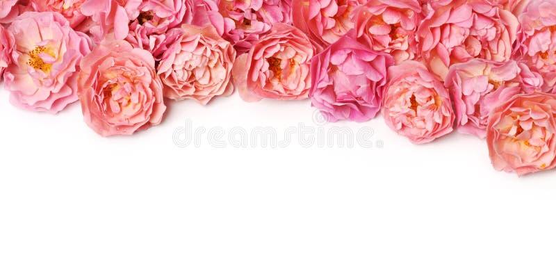 Grens van roze rozen royalty-vrije stock fotografie