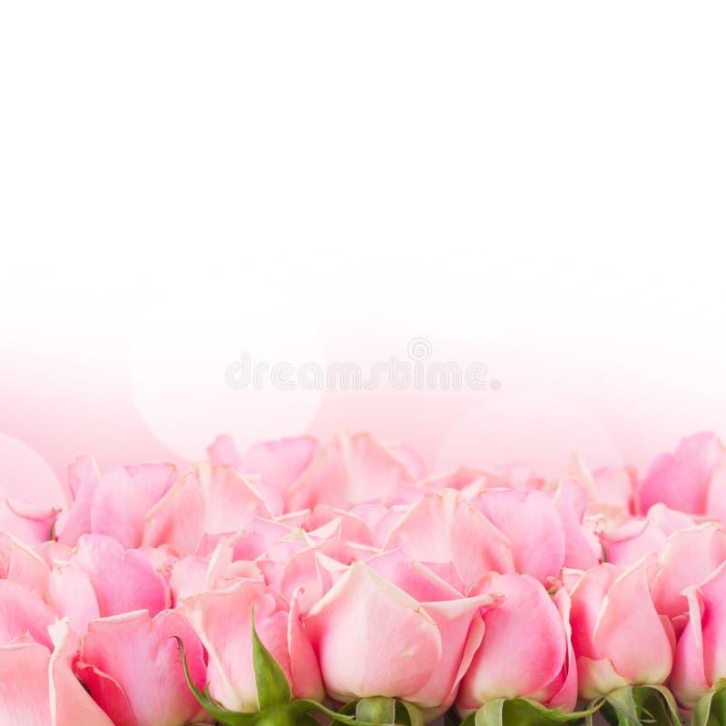 Grens van roze tuinrozen royalty-vrije stock afbeeldingen