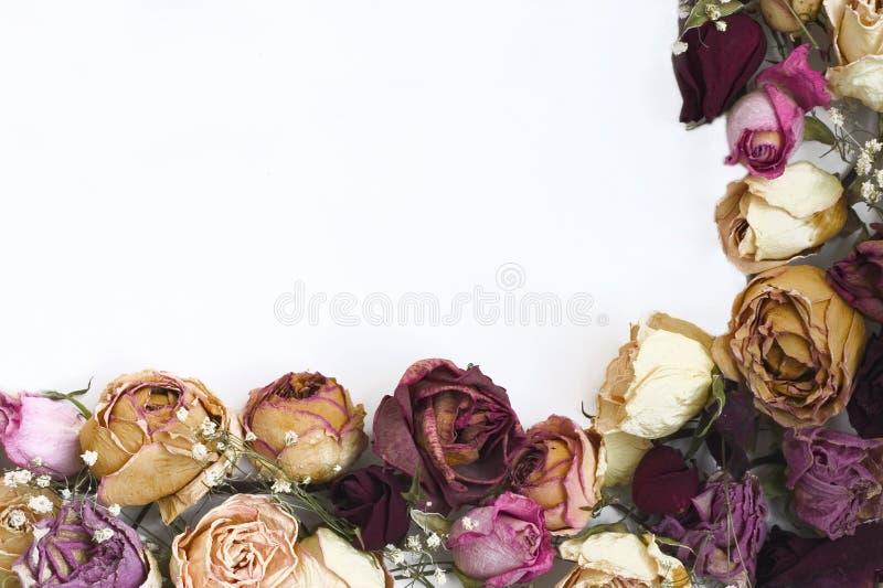 Grens van rozen royalty-vrije stock afbeelding