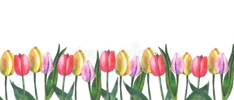 Grens van tulpen op witte achtergrond met waterverf vector illustratie