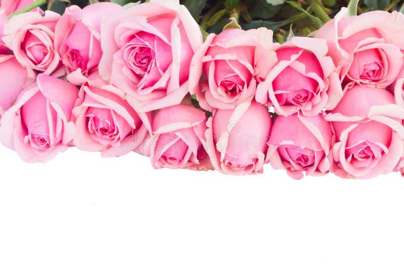 Grens van verse roze tuinrozen stock foto's