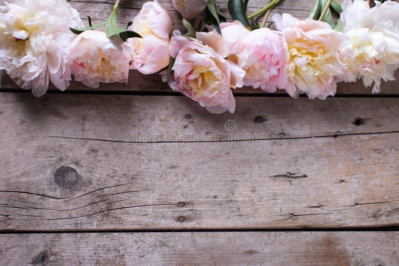 Grenze von den zarten rosa Pfingstrosen blüht auf gealtertem hölzernem backgrou stockfoto