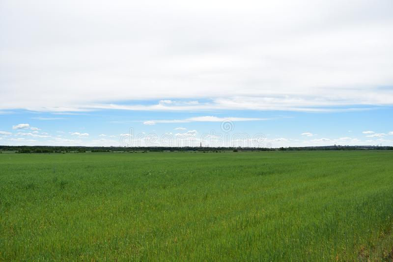 Grenzeloos landelijk dorpsgebied van de hemelwolken van graangewassengewassen stock foto