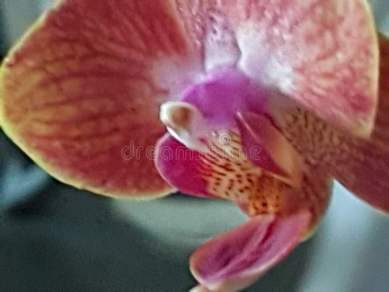 Grern植物狂放的绿色Orchidee 免版税库存图片