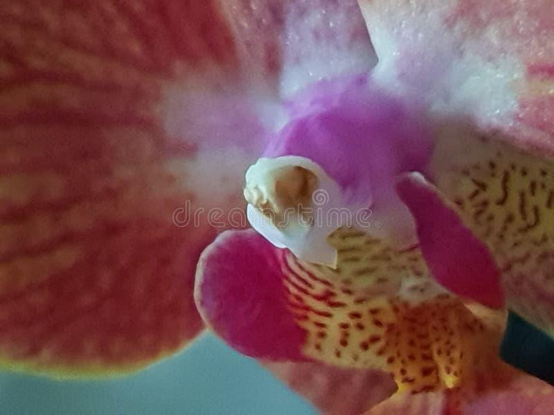 Grern植物狂放的绿色Orchidee 库存照片