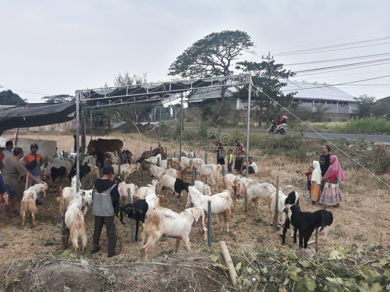 Gresik,东爪哇/印度尼西亚- 2019年7月28日:欢迎Eid AlAdha人开始卖母牛和山羊 免版税图库摄影