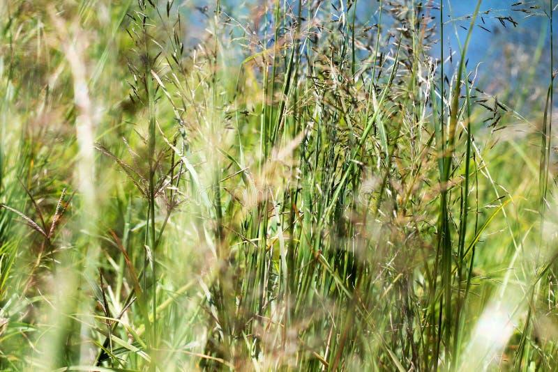 Gress in cisanti lake. View DOF in cisanti lake. water to citarum river. cisanti citarum dof gress lake river view water stock photography