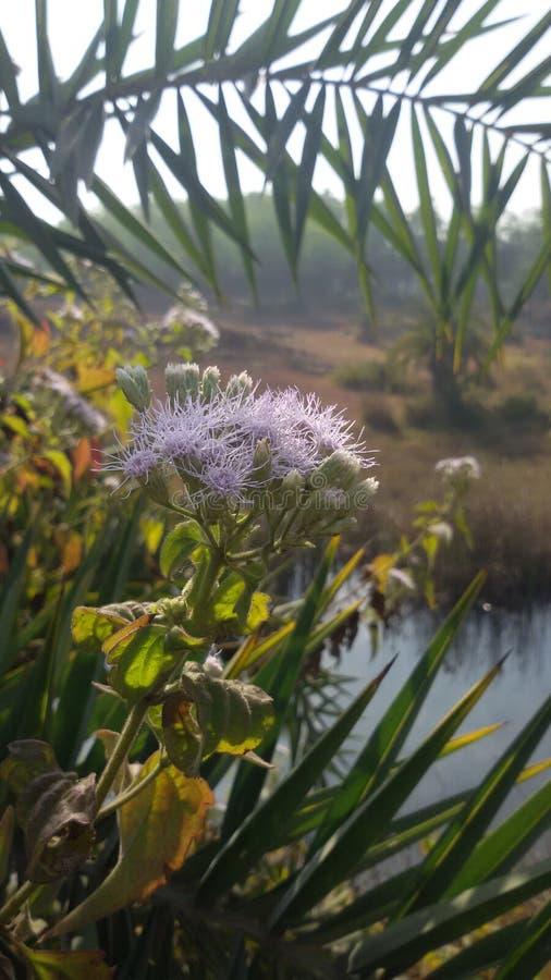 Gress kwiat zdjęcia stock